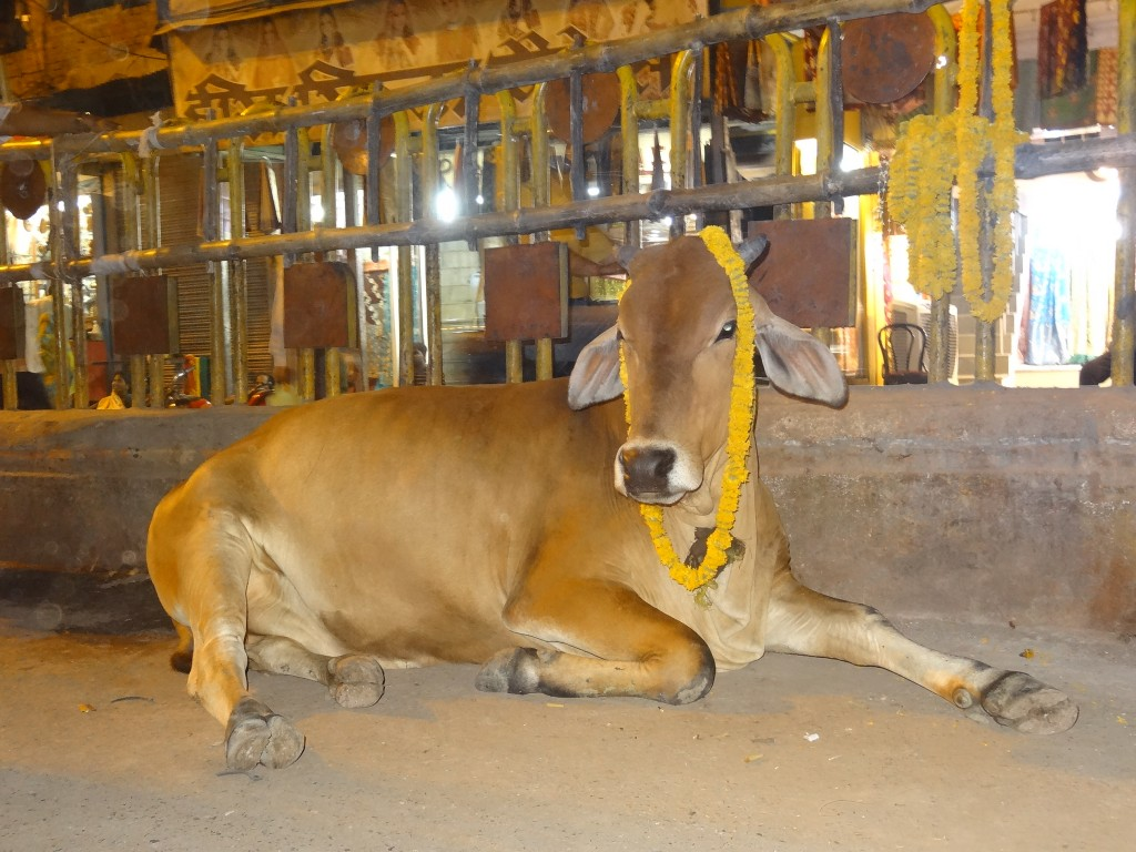 17 mai dans Uttar Pradesh dsc03567